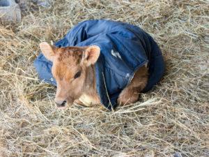 Moana wearing her vest